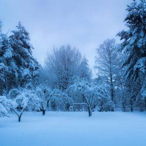 Garten im Winter nutzen