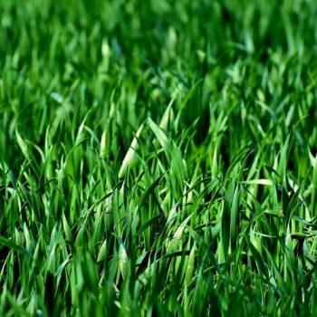 Rasen verlegen