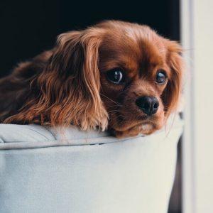 Tierhaltung in Wohnung